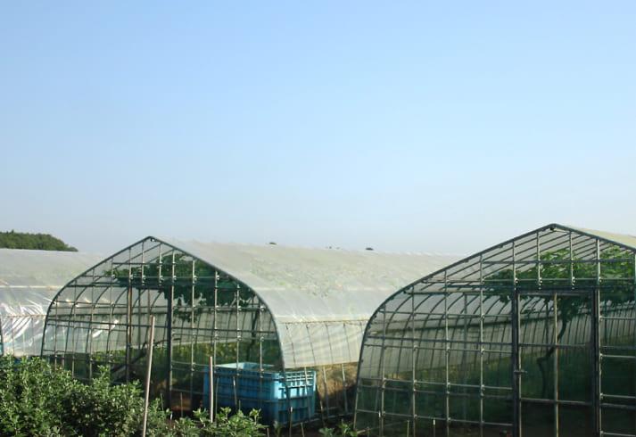 房の駅農場